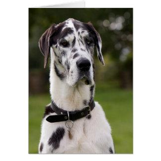 Carte de voeux de portrait de chien de great dane