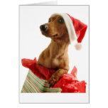 Carte de voeux de teckel de Noël