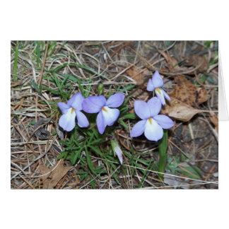 Carte de voeux de violettes de printemps