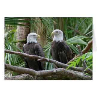 Carte de voeux d'Eagle chauve
