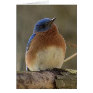 Carte de voeux d'oiseau bleu