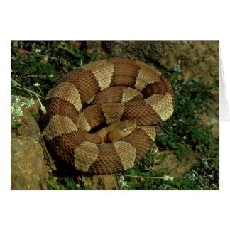 carte de voeux large-réunie de serpent de