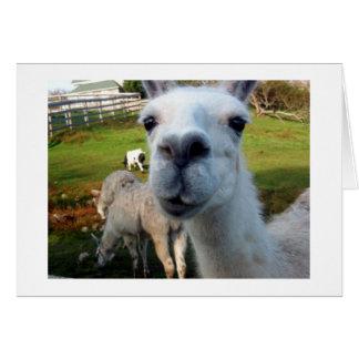 Carte de voeux maladroite de blanc de lama