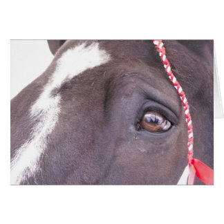 Carte de voeux noire de cheval