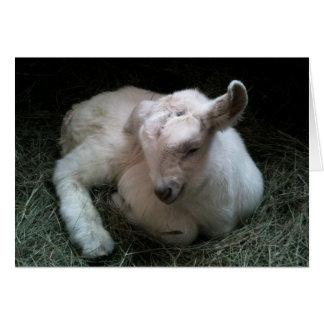 Carte de voeux nouveau-née d'enfant de chèvre