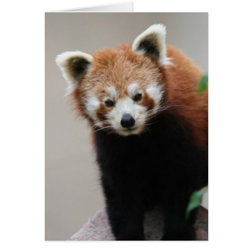 Carte de voeux personnalisable de panda rouge