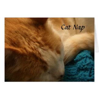 Carte de voeux : Petit somme de chat