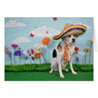 Carte de voeux, photo de chien dans le sombrero