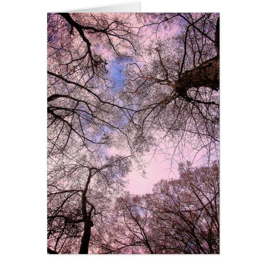 Carte de Voeux - Promo - Canopy d'Arbres