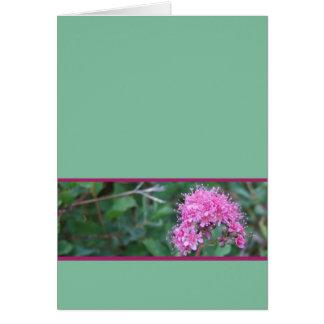 Carte de voeux rose de fleur sauvage