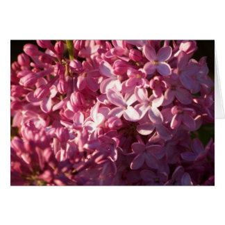 Carte de voeux rose de lilas