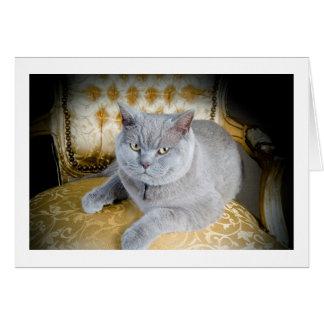 Carte de voeux vierge : Chat gris grincheux !