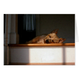 Carte de voeux vierge de Terrier de cairn au