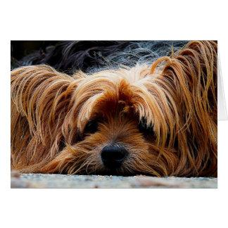 Carte de voeux vierge de Yorkshire Terrier