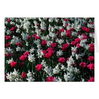 Carte de voeux vierge des tulipes 16