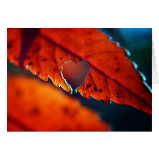 Carte de voeux vierge - feuillage d'automne