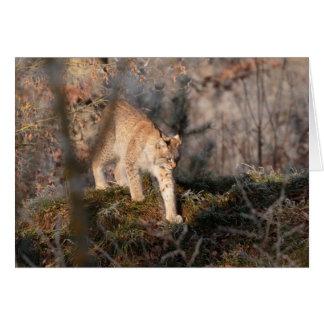 Carte de voeux vierge : Lynx de vagabondage