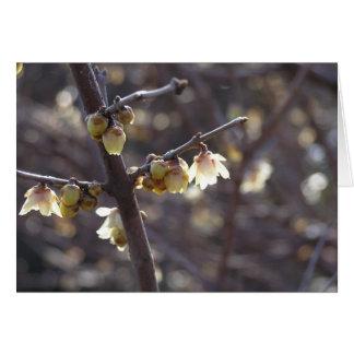 Carte de Wintersweet (praecox de Chimonanthus)