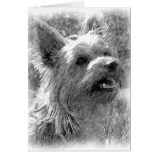 Carte de Yorkshire Terrier