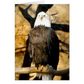 Carte d'Eagle chauve
