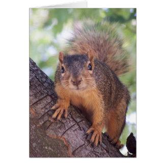 Carte d'écureuil