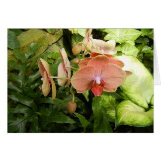 Carte d'orchidée de Phalaenopsis