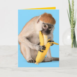 Cartes De Vœux Singe Drole Zazzle Fr