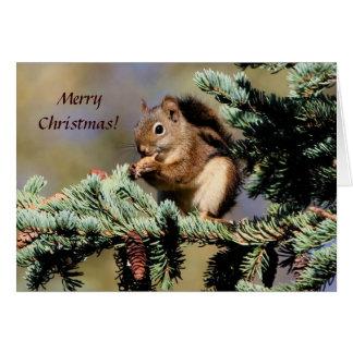 Carte/écureuil rouge/Noël Carte De Vœux