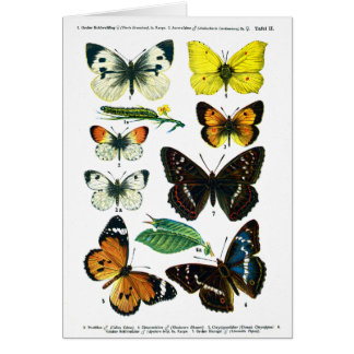 Carte européenne du plat de papillons II