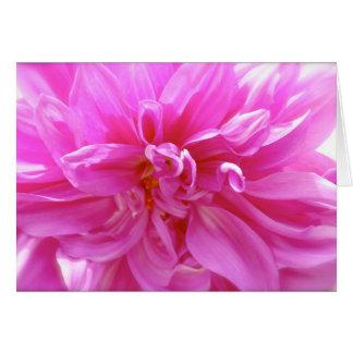 Carte florale de blanc rose de dahlia