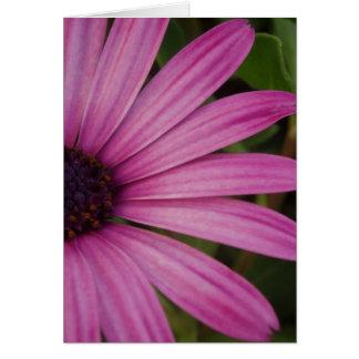 Carte florale pourpre rose