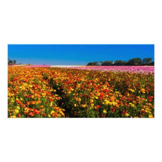 Carte Gisements de fleur