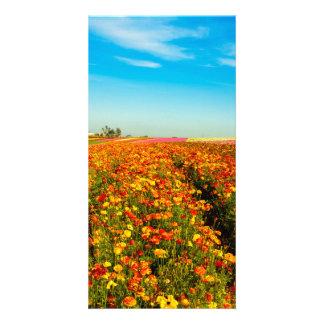 Carte Gisements de fleur de la Californie