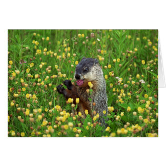 Carte heureuse de jour de Groundhog !