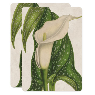 Carte Le vert vintage de zantedeschia de fleur laisse le