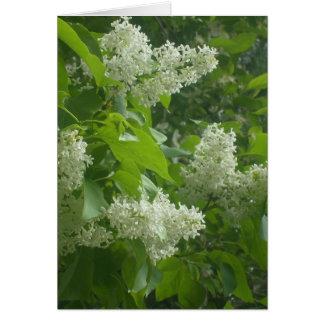 Carte lilas blanche