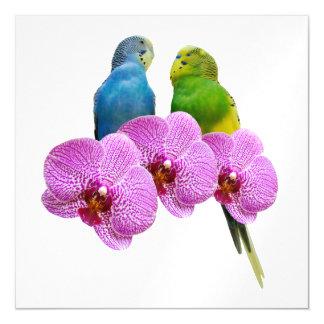 Carte Magnétique Perruche avec l'orchidée pourpre