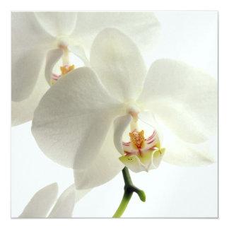 Carte Nature florale de fleur de fleur blanche