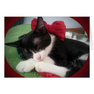 Carte noire et blanche de délivrance de chat de