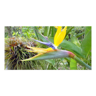 Carte oiseau de fleur de paradis