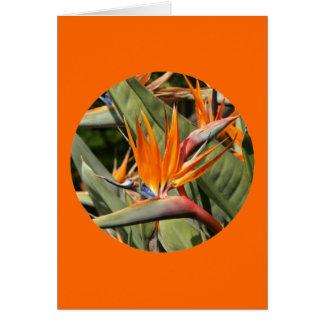 """Carte, """"oiseau des fleurs de paradis en cercle """" carte de vœux"""