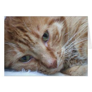 Carte orange de chat