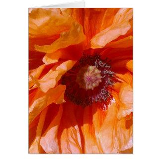 Carte orange de pavot