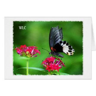 Carte personnelle - grand papillon mormon coloré