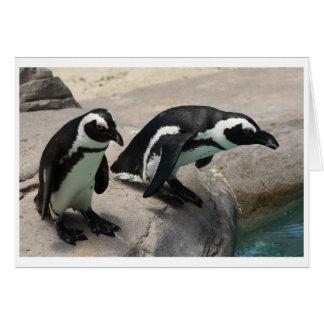 Carte photo de deux pingouins