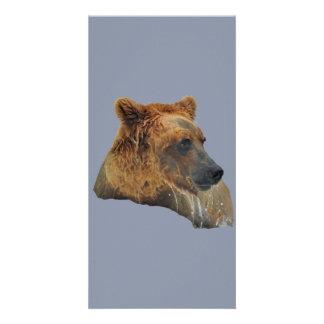 carte photo d'ours gris