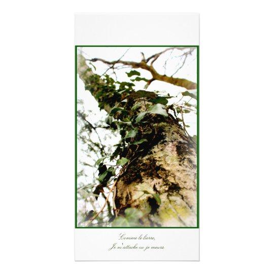 carte photo vert arbre mousse lierre forêt bois