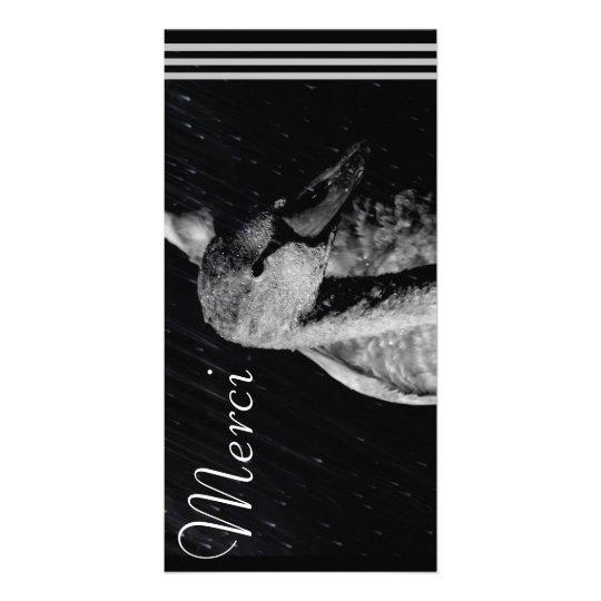 Carte Photocard Jeune Cygne Noir/Blanc