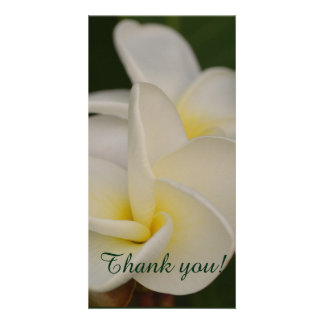 Carte Plumeria blanc et jaune