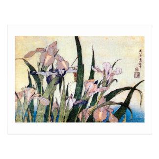 Carte Postale 杜若ときりぎりす, iris de 北斎 et sauterelle, Hokusai